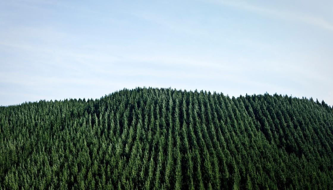 forestry-trees-1120